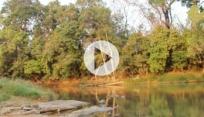 River of Vitality Meditation